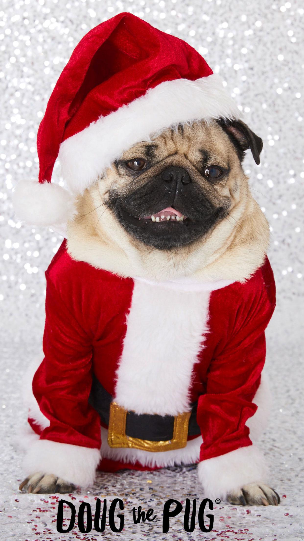 free doug the pug christmas wallpapers
